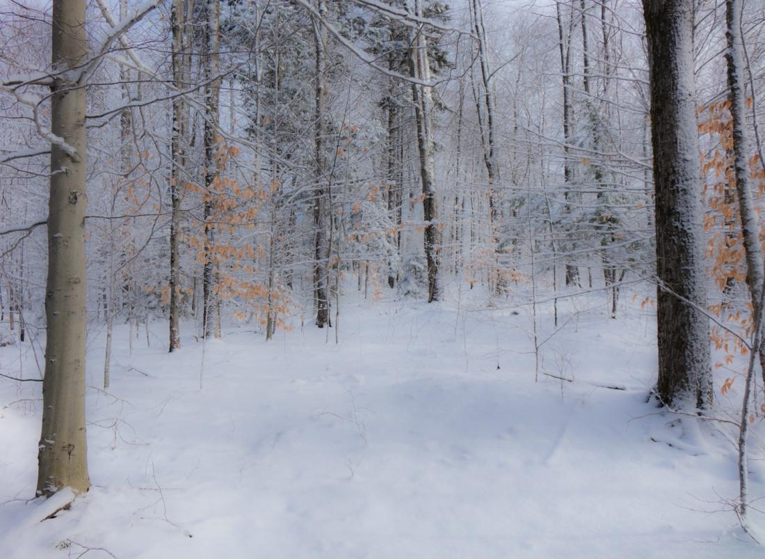 DSC01791 Douceur d'hiver