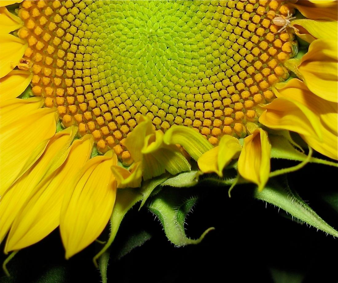 2008-09-03 IMG_0443_2 Un tourne-l'œil